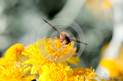 Bee and pollen