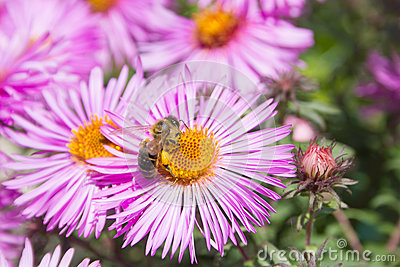 Bee pollinating flower