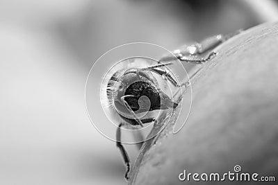 Bee to job