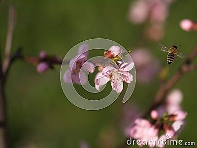 Bee in work