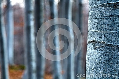 Beech- wood, abstract composition