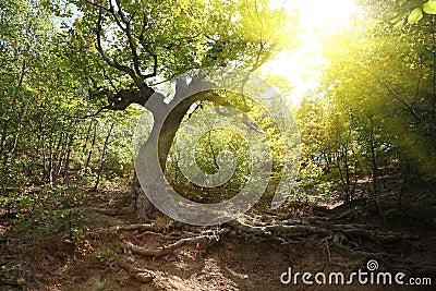 Beechen grove