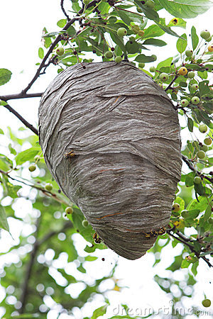 Free Beehive Stock Images - 6080474