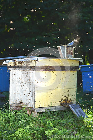 Beehive in apiary