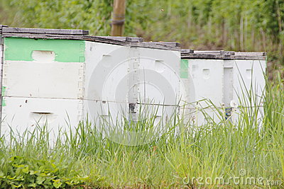 Beehive Boxes in Washington State
