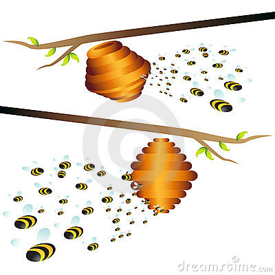 Beehive Branch