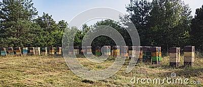 Beehives in a Danish meadow
