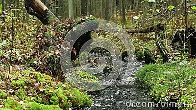 Beek in groen regenwoud stock video