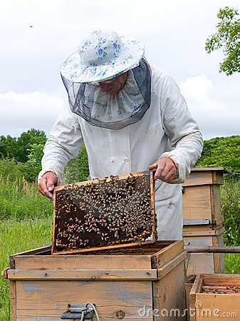 Free Beekeeper 15 Stock Images - 3581094