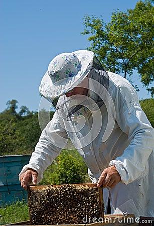 Beekeeper 41