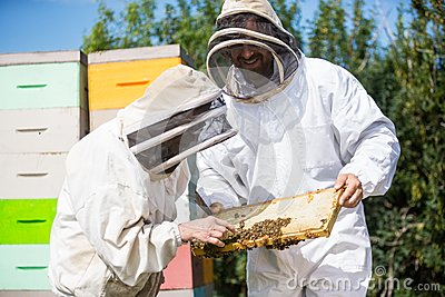 Beekeepers Inspecting Honeycomb Frame