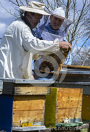 Free Beekeepers Working On Beehives Stock Image - 71034831