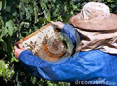 Beekeeping hobby
