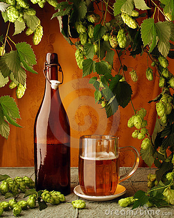 Free Beer And Hop Plant Stock Photos - 6353273