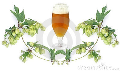 Beer and hops-plant
