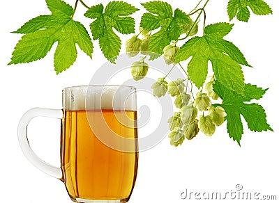 Beer mug and fresh hops