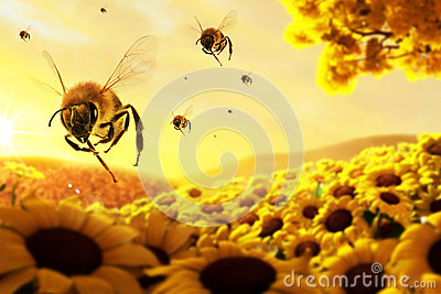 Honey Bees In Action