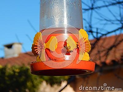 Bees feeding before the hummingbird