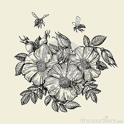 Free Bees Flying To The Flower. Hand Drawn Beekeeping. Vector Illustration Royalty Free Stock Photo - 74797135