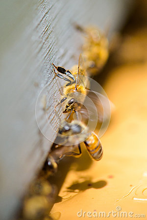 Free Bees Going Out Frame Royalty Free Stock Photo - 86208125
