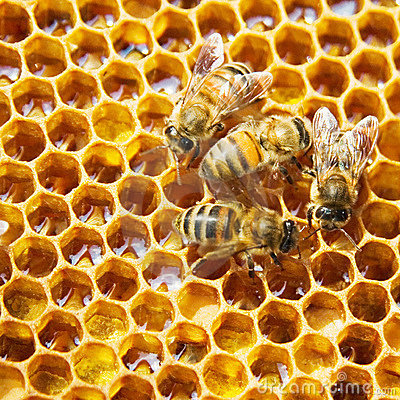 Free Bees On Honeycells Stock Image - 7949221