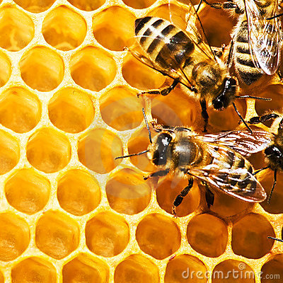Free Bees On Honeycells Royalty Free Stock Photography - 8622817