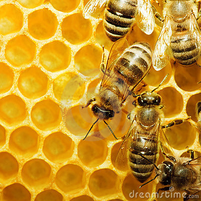 Free Bees On Honeycells Royalty Free Stock Image - 9945186