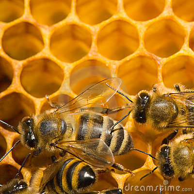 Free Bees On Honeycomb Royalty Free Stock Images - 7470969