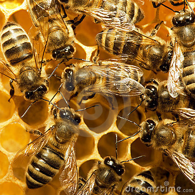 Free Bees On The Hive Royalty Free Stock Images - 14261199