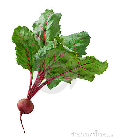 Beet isolated