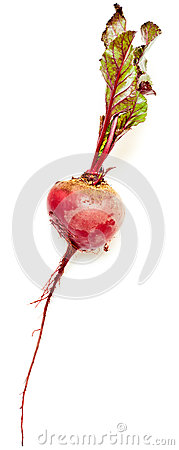 Beet with leaves on a white background