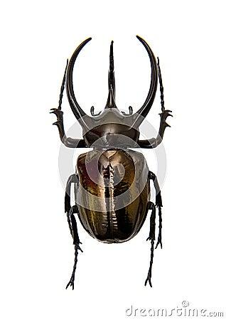 Free Beetle Stock Photo - 29364930