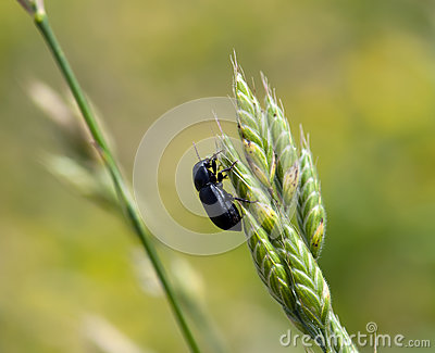 Beetle crawl on green plant