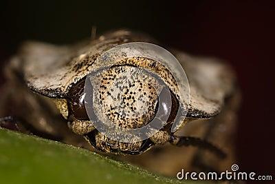 Beetle face macro