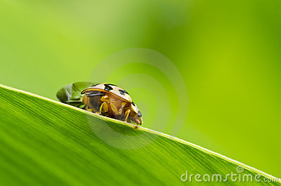 Beetle in green nature macro
