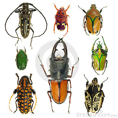Free Beetles Collection Royalty Free Stock Photos - 18523618