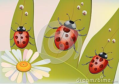 Beetles  ,dew .