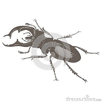 Beetles - vintage engraved illustration