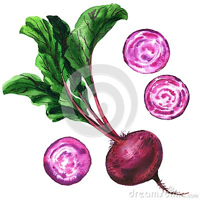 Beetroot with leaves, fresh whole and slices beet isolated, set beets, food, vegetable, watercolor illustration on white Cartoon Illustration