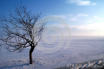 Befestigungsklammerbaum auf einem Wintersturm