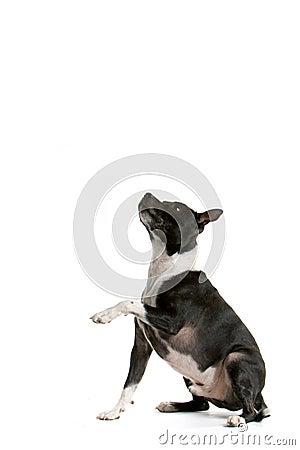 Free Begging Dog Royalty Free Stock Image - 2203296