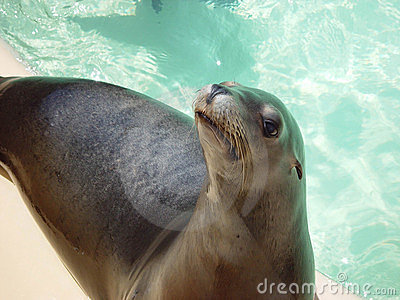 BEGGING SEAL