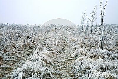 Beginning of winter