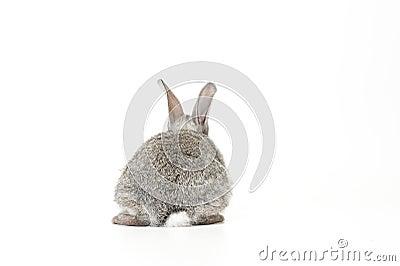 Behandla som ett barn den gulliga kaninen
