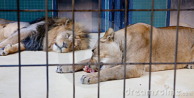 Behind bars in a zoo