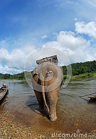 Behind the elephant