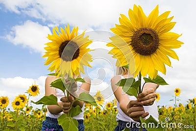 Behind sunflowers
