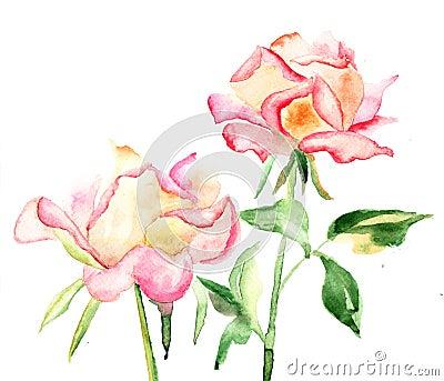 Bei fiori delle rose