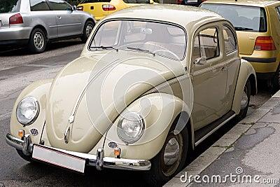 Beige beetle