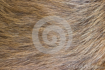A beige dog fur.